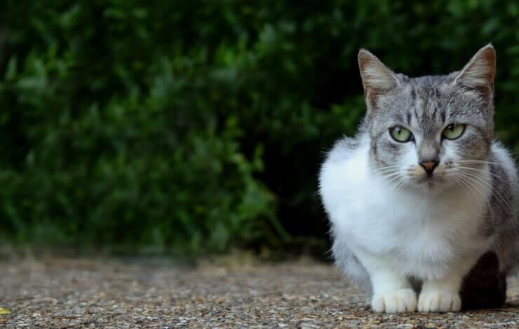 アドセンスの「サイト追加」の審査基準が気になっている人のイメージした猫の画像