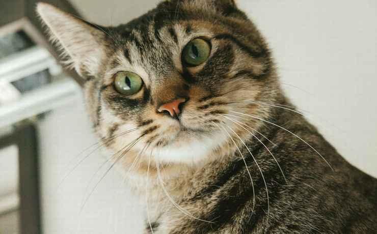 驚いた顔をしているインパクトのある猫の画像